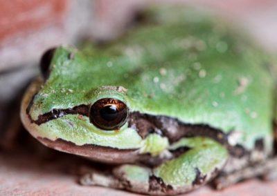 AZ-treefrog-greenhouse