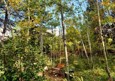 Aspen-grove-bench